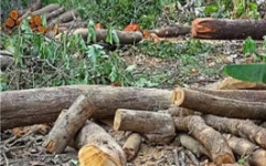 MHOA condemns media owner act of harming trees