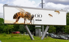 Ocean Outdoor creates city centre wildlife corridors across its OOH estate