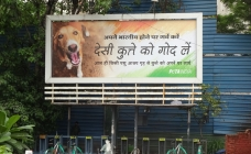 PETA makes a strong case for adoption of stray animals